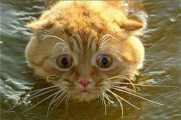喵了个咪的,最讨厌游泳什么的了
