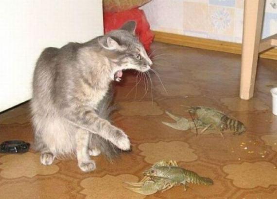 虾米玩意,吓死俺了