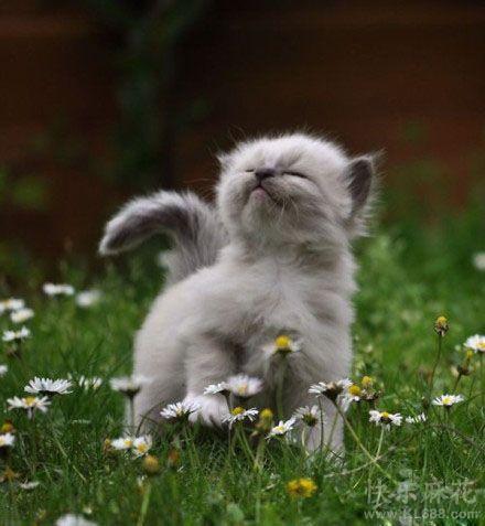 品味花草的芬芳